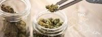 Apothekenteams: Verstärkter Wunsch nach Cannabis-Legalisierung